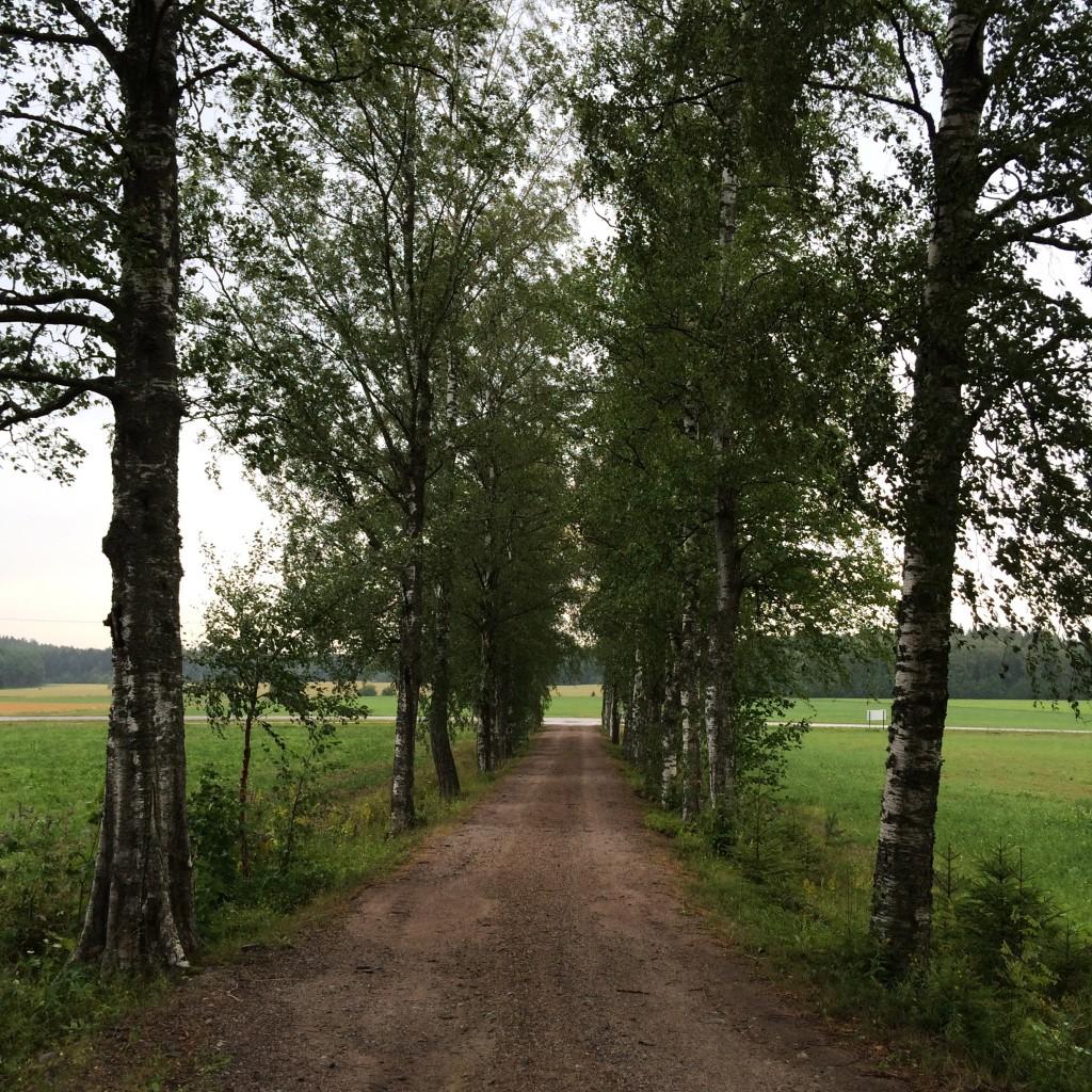 Lassilan tilalla on paljon vanhoja, uskomattoman kauniita puita. Tule käymään.
