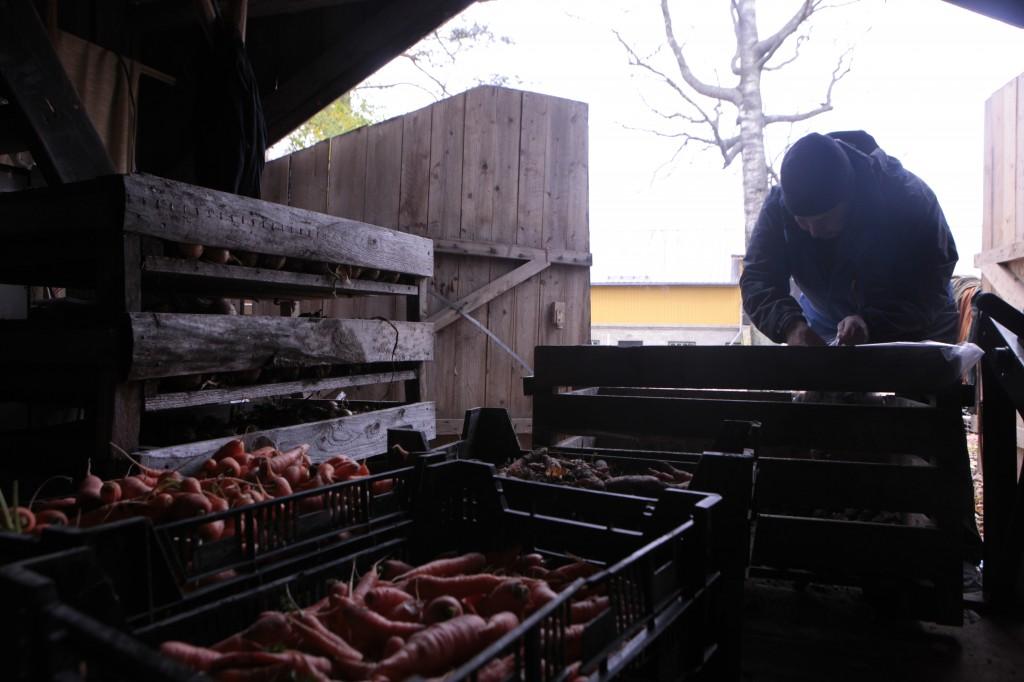 jussi_ja perunalaatikko