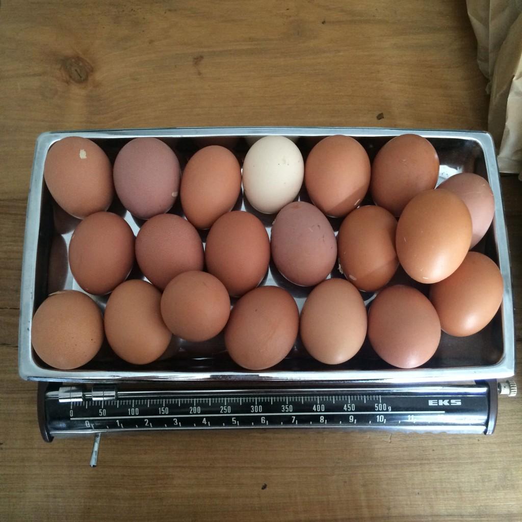 omamaa_munat